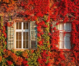 autumn window treatment